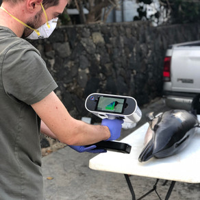 3D-laser scanning is helping us to better understand the health status of marine mammals