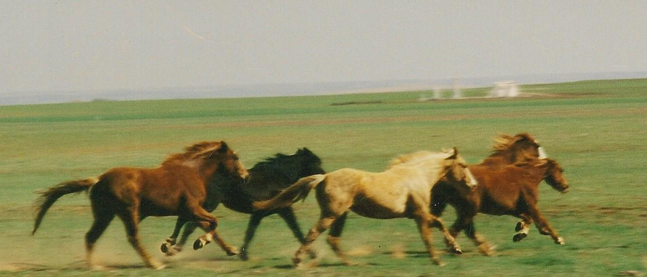 horses on the run 2