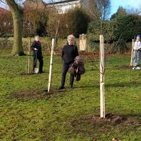 More Fruit Trees in Victoria Park