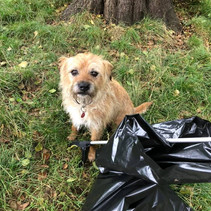 Summer Litter Pick