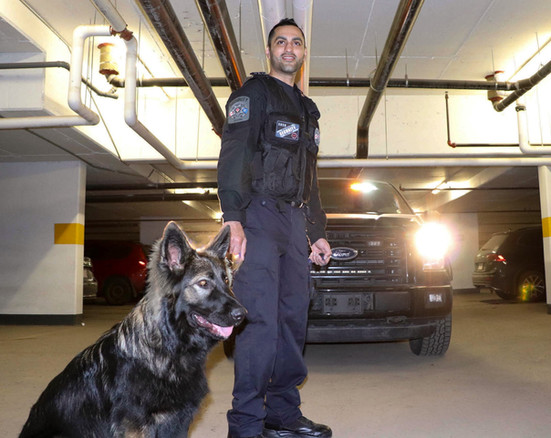K9 Detection Dogs