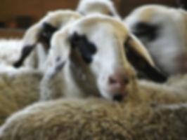 Presisio-Slow-Food-Trentino-Alto-Adige-v