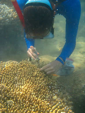 Sampling coral underwater.jpg
