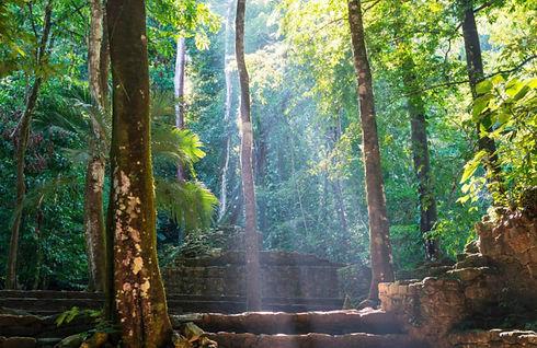 palenque_trees.jpg