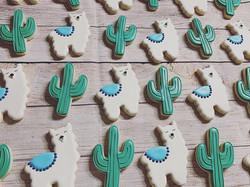 Llamas & Cactus 🌵 ._._._