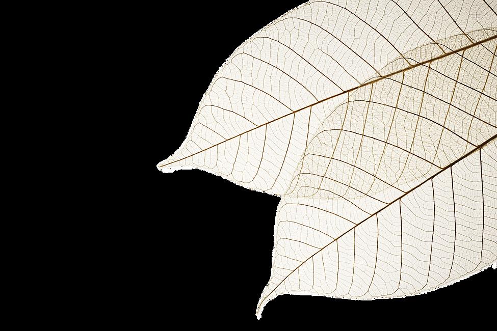 dried-leaves-edited