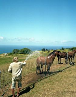 hawaii_19