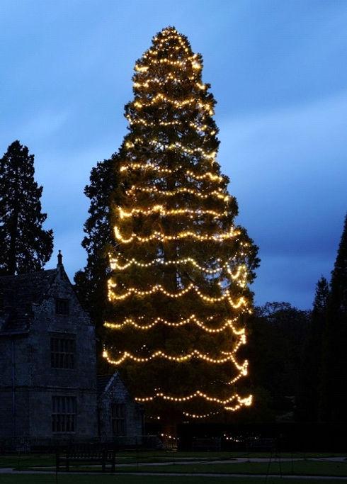 wakehurst xmas tree.jpg