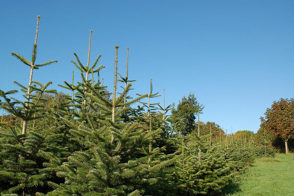Multiple trees and blue sky.JPG