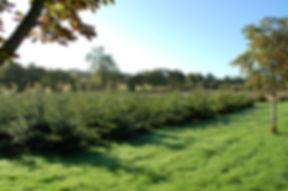 view through trees.JPG
