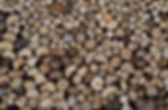 log close up.jpg