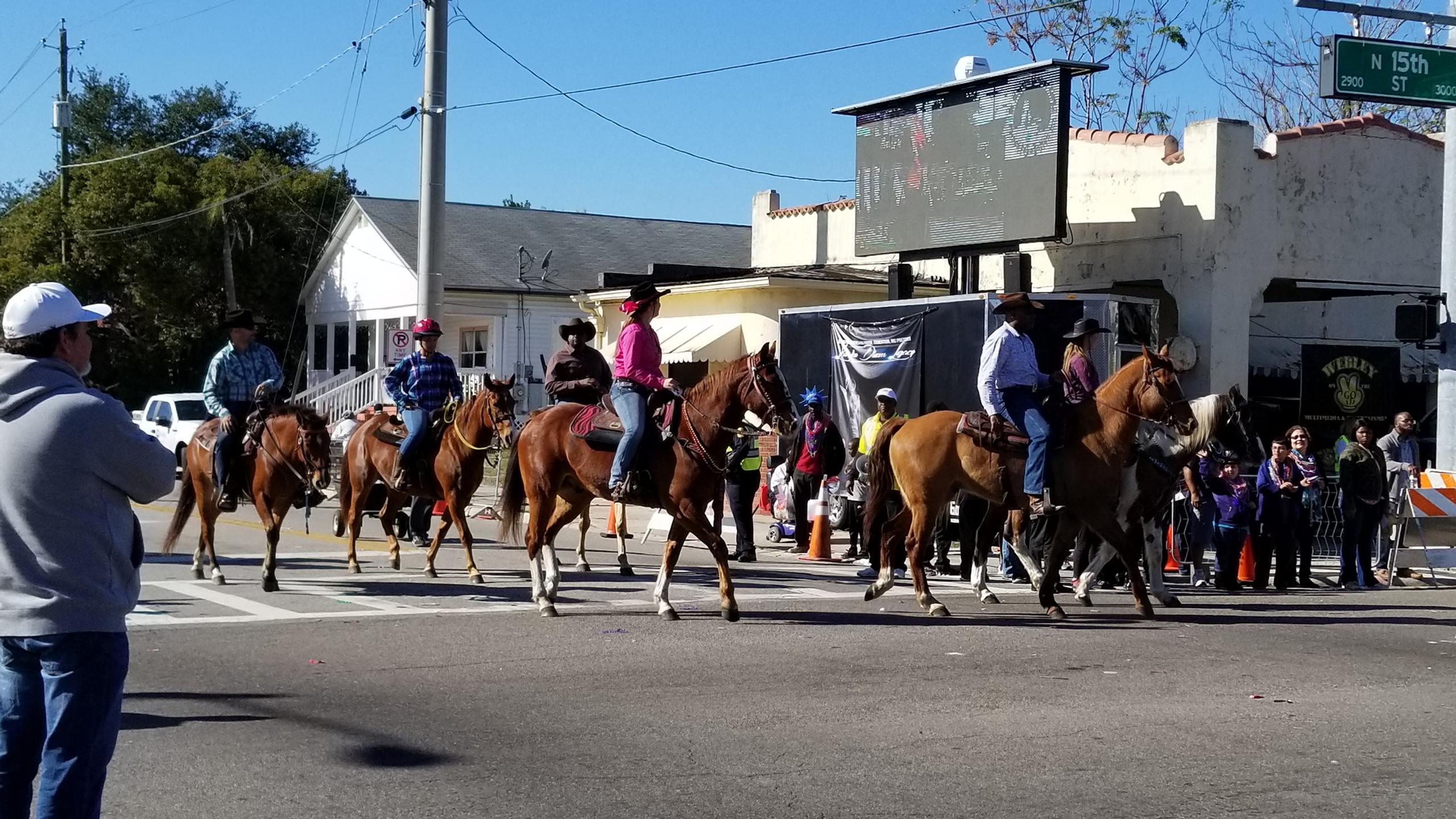 Tampa Area Equestrians