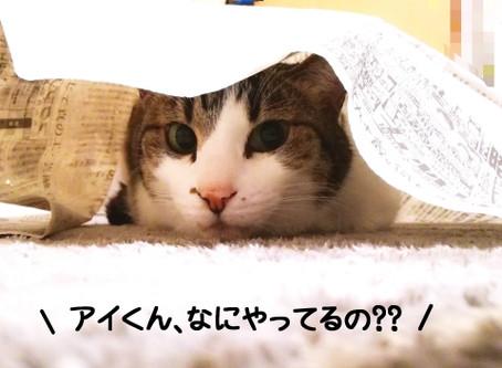 【おしっぽ防災WEEK🐾①】室内の安全を見直そう♪