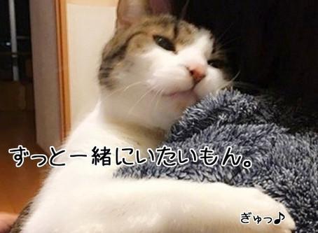 猫さんの腎臓病を早期発見できる検査(SDMA )があるんだよ☆
