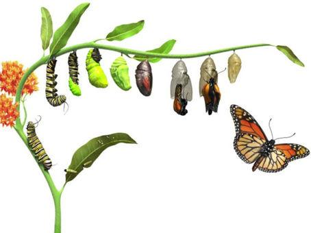 Episode 21 - What makes an organization transform?