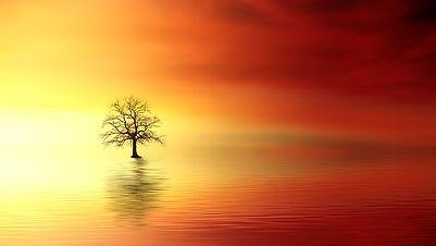 sunset banner.jpg