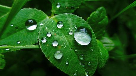 leaves_grass_dew_84019_3840x2160.jpg