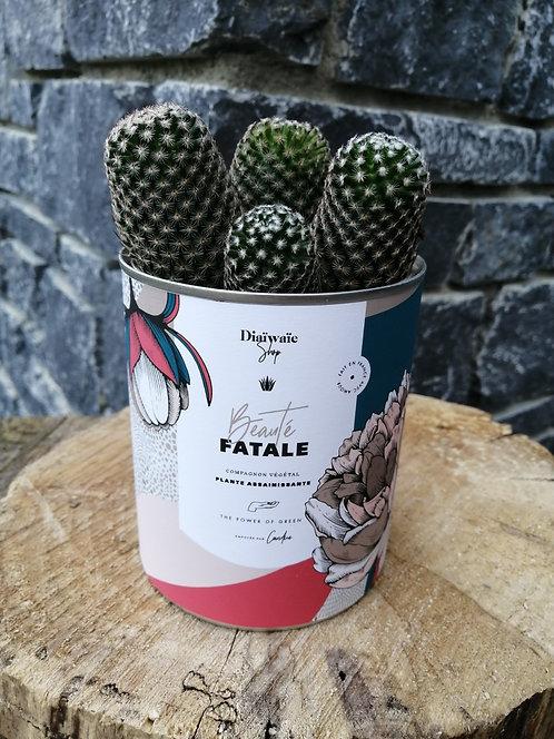 plantes dépolluantes Beauté FATALE