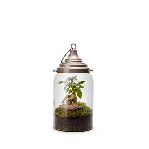 Lanterne lumineuse terrarium