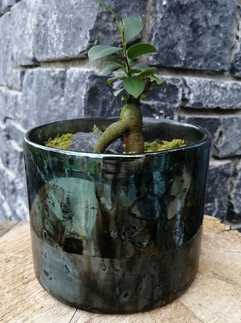 Plante + pot