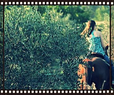 צילום בוק בחוות סוסים