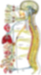 colonna e organi.jpeg