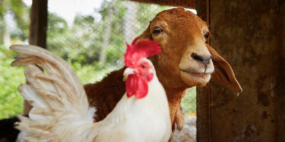 Zwierzęta 1 - Zajęcia ONLINE
