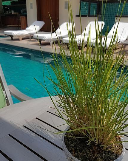 Bangkok Best Hotels