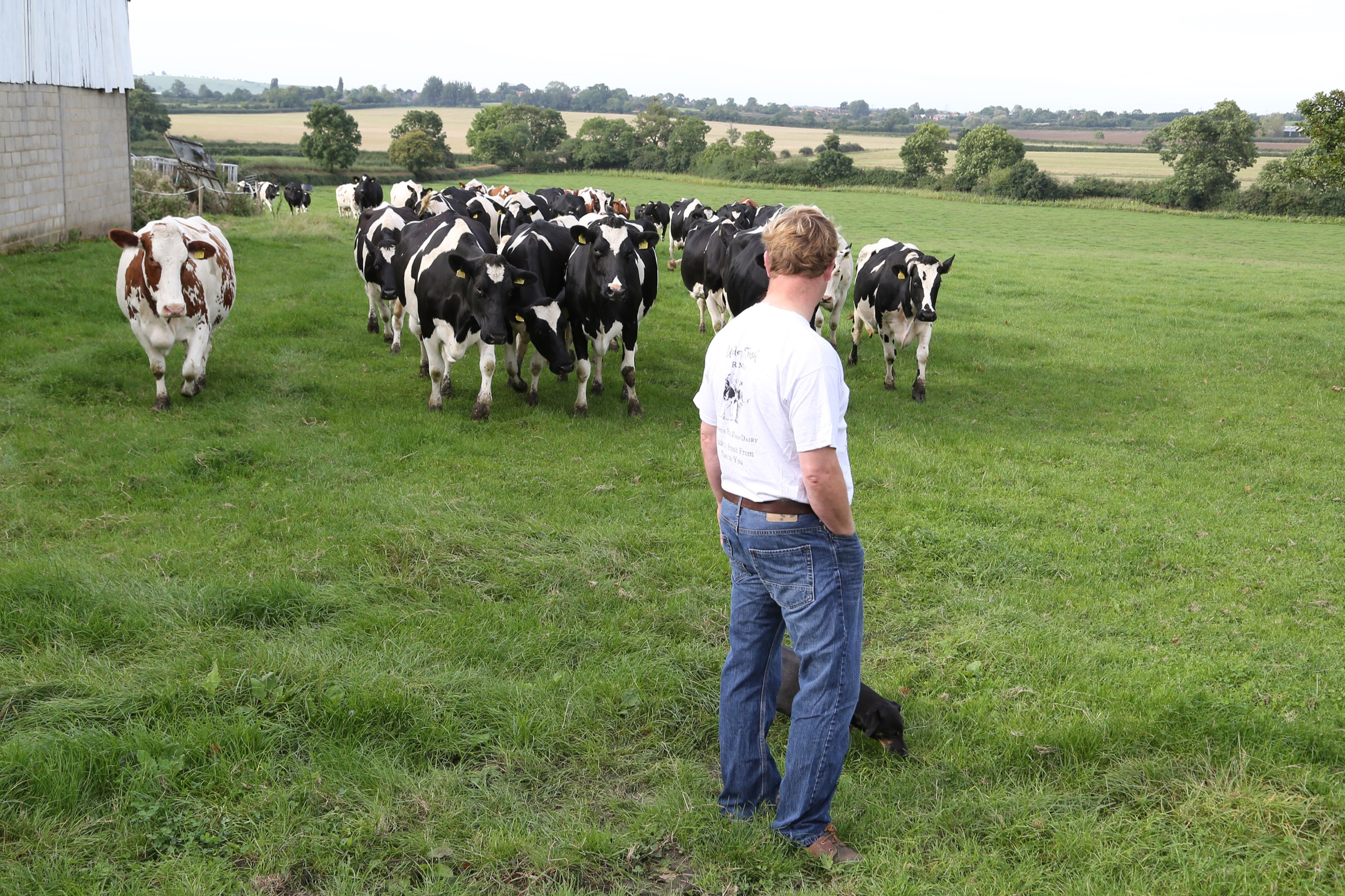 Ian & the cows