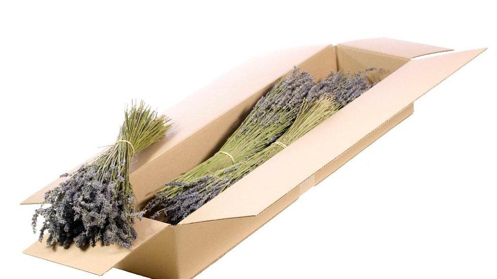 getrockneter natürlicher Lavendel 5x Bund