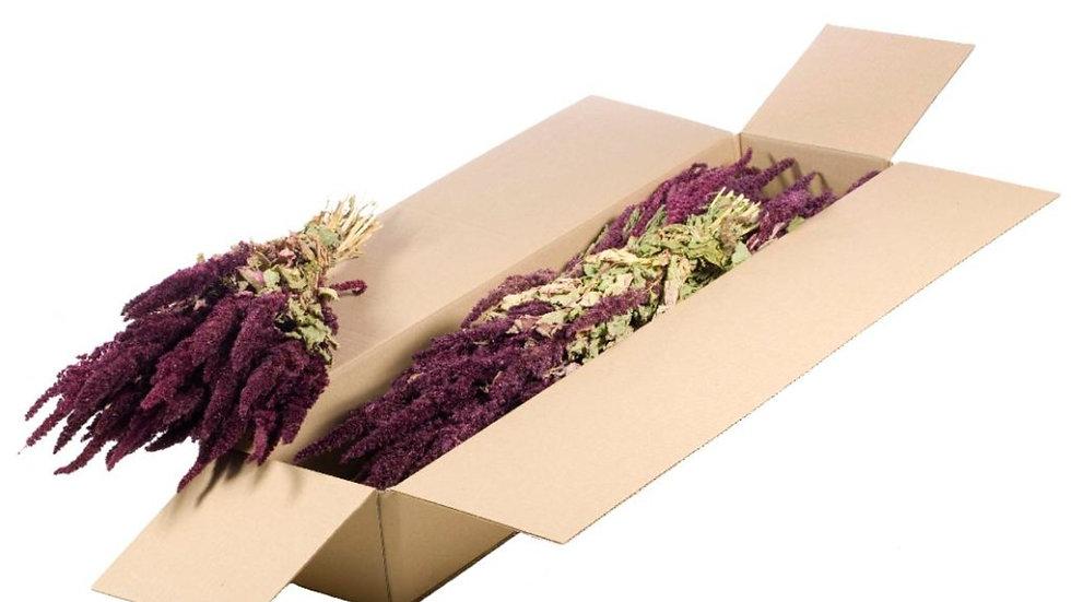 getrockneter Fuchsschwanz - Amaranthus natural rot - 4x Bund