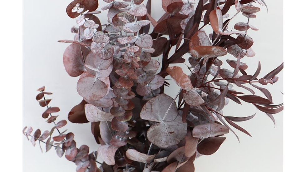 Eucalyptus rot - 1x Bunt - gemischt