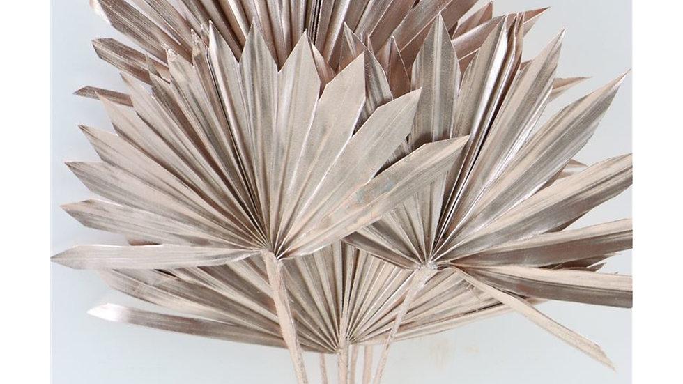 Getrocknete Sonnenspeer, Palmblatt 3x Bund