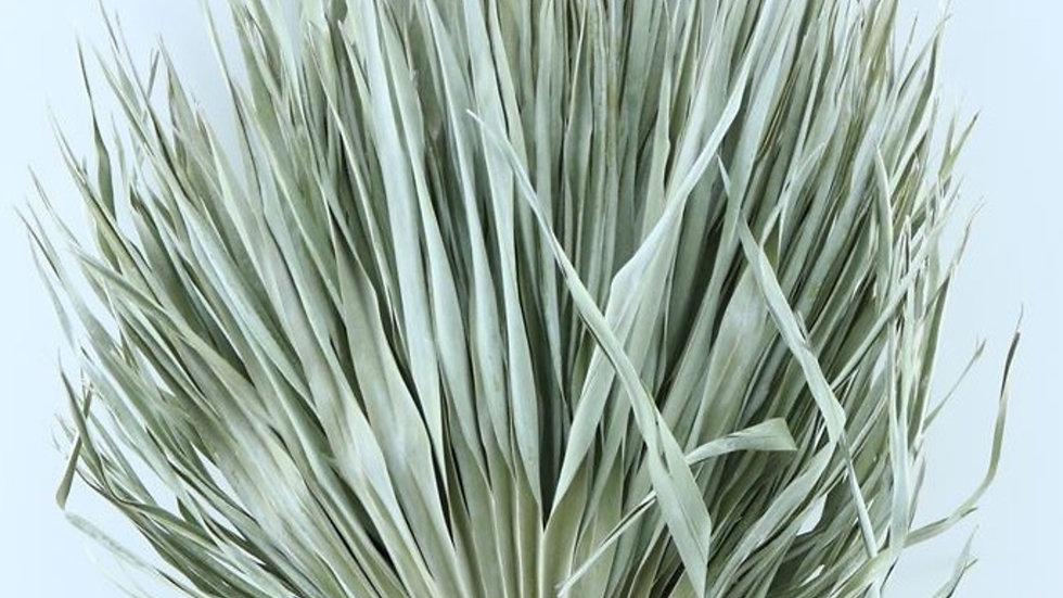 Palmblatt -  30x Zweige