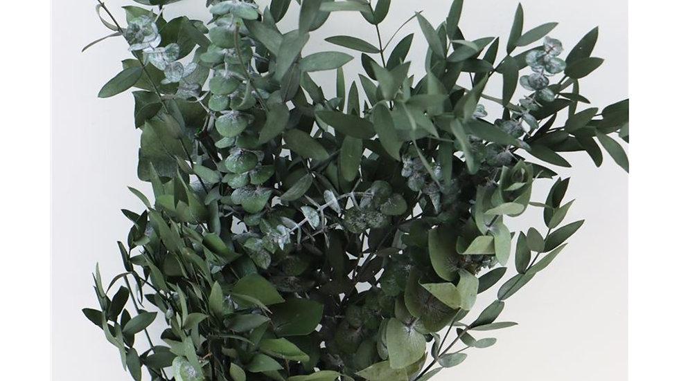 Eucalyptus grün - 1x Bunt - gemischt