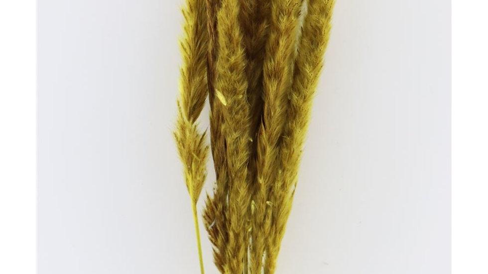 Getrocknete flauschige Pampa 1x Bund - 75cm