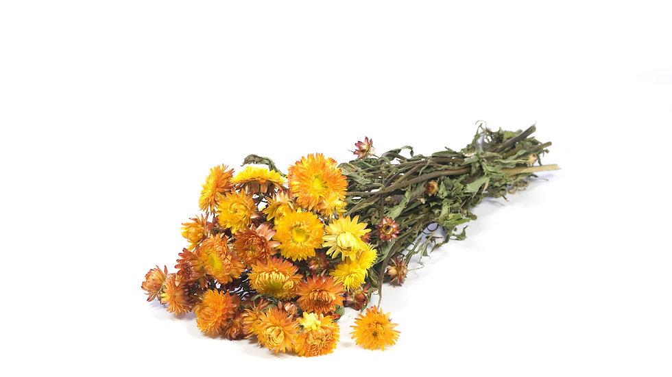 getrockneter Strohblume - Helichrysum Orange 4x Bund