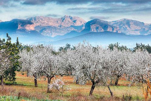 Mallorca: February 6 - 13, 2021