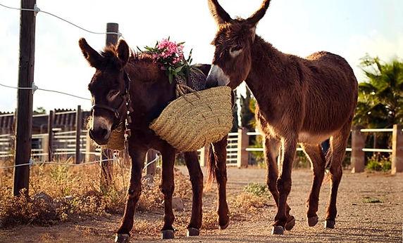 Can-Paulino-Mallorca-Pferd-Esel-Eselwand
