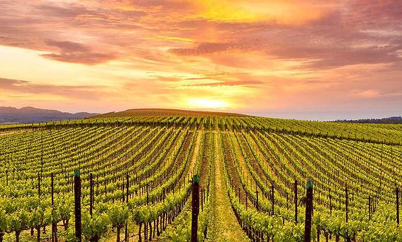 Wineries-Vineyard-Long-Island-NY.jpg