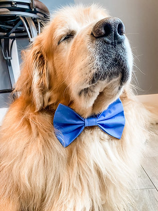 THE BASIC BLUE BOW TIE