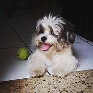jack-primeirodoghospede.jpg