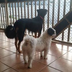dogs-casaantiga-bangalo