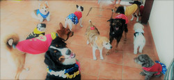 cães-hostel-carnaval