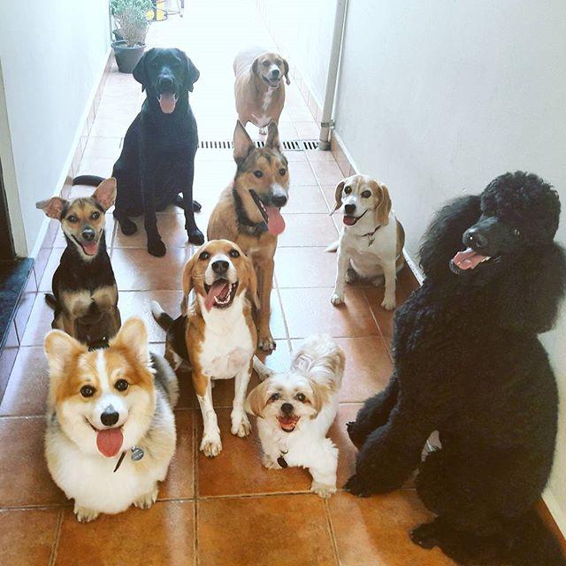 fotodematilha-hostel-cachorro