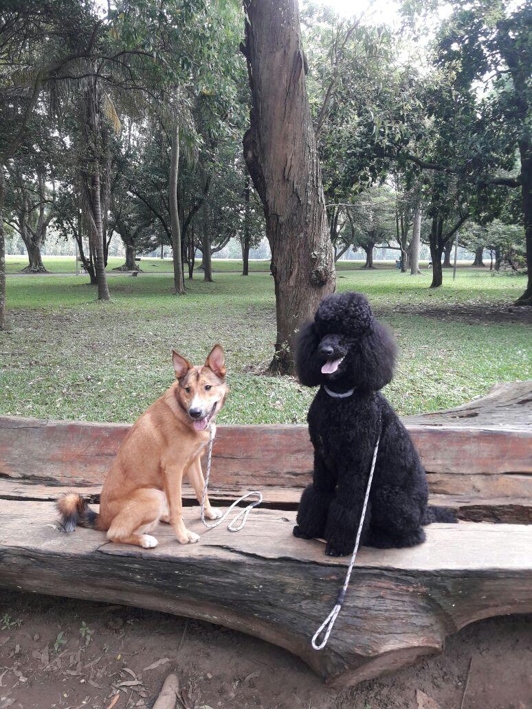 parqueibirapuera-excursãodecachorro