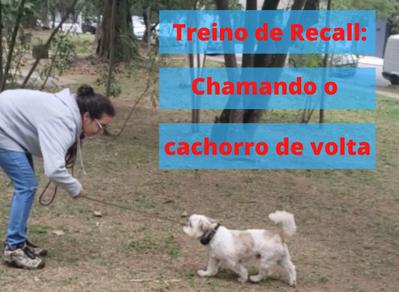 A importância de ensinar os cães em casa antes de exigir o comportamento esperado na rua