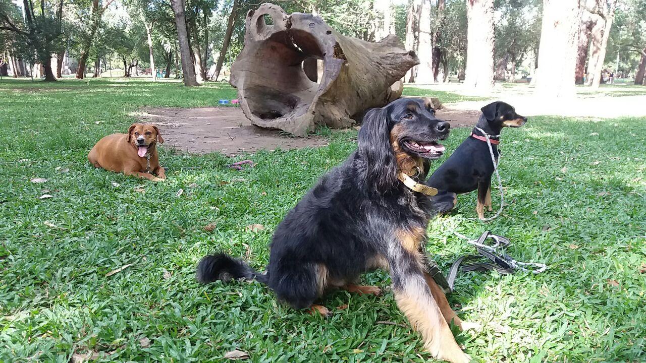 Parque Ibirapuera-cães-daycare