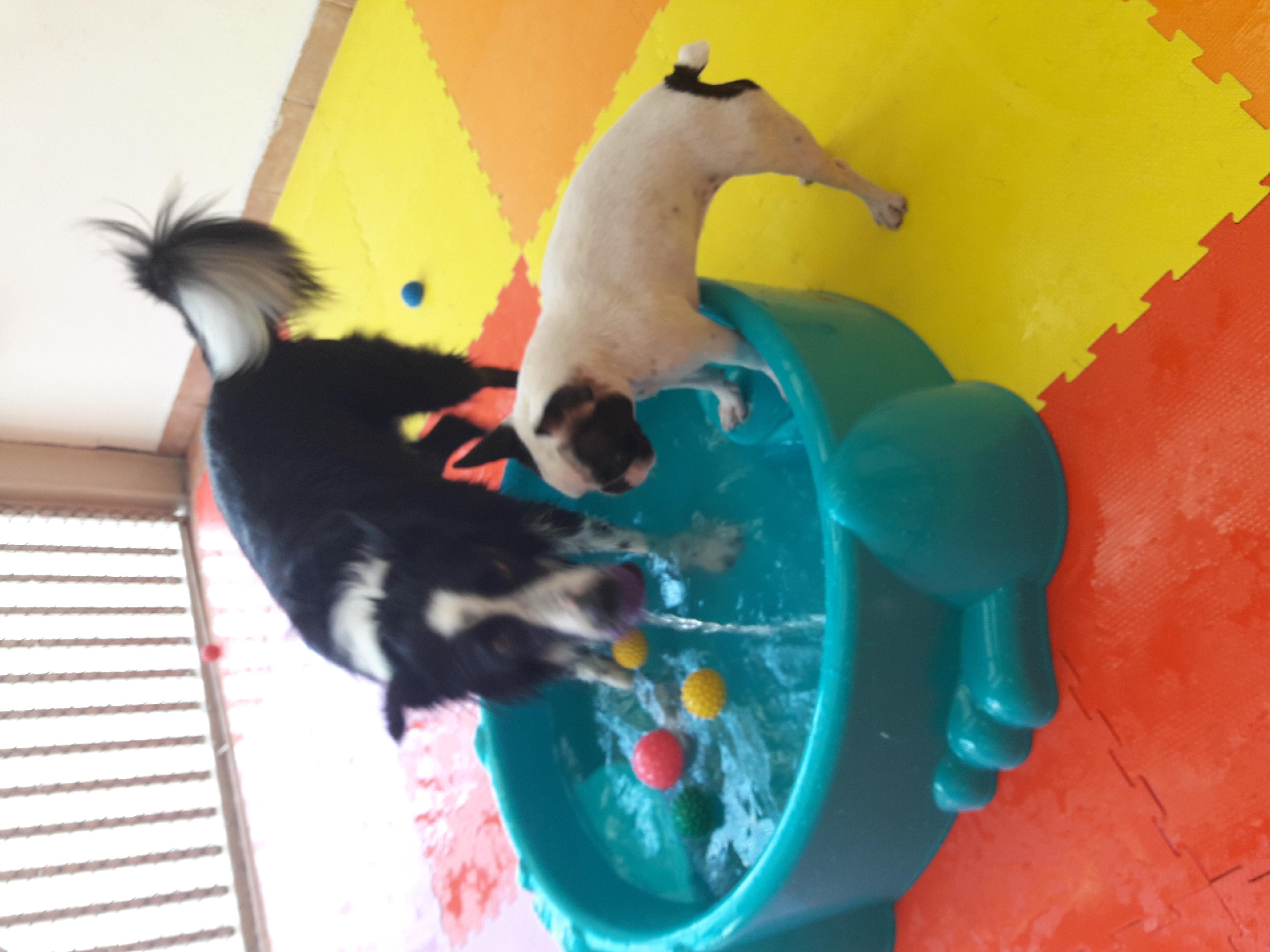 Bolinha-cachorro-piscina