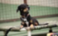 cachorro srd preto deitado em uma caminha suspensa